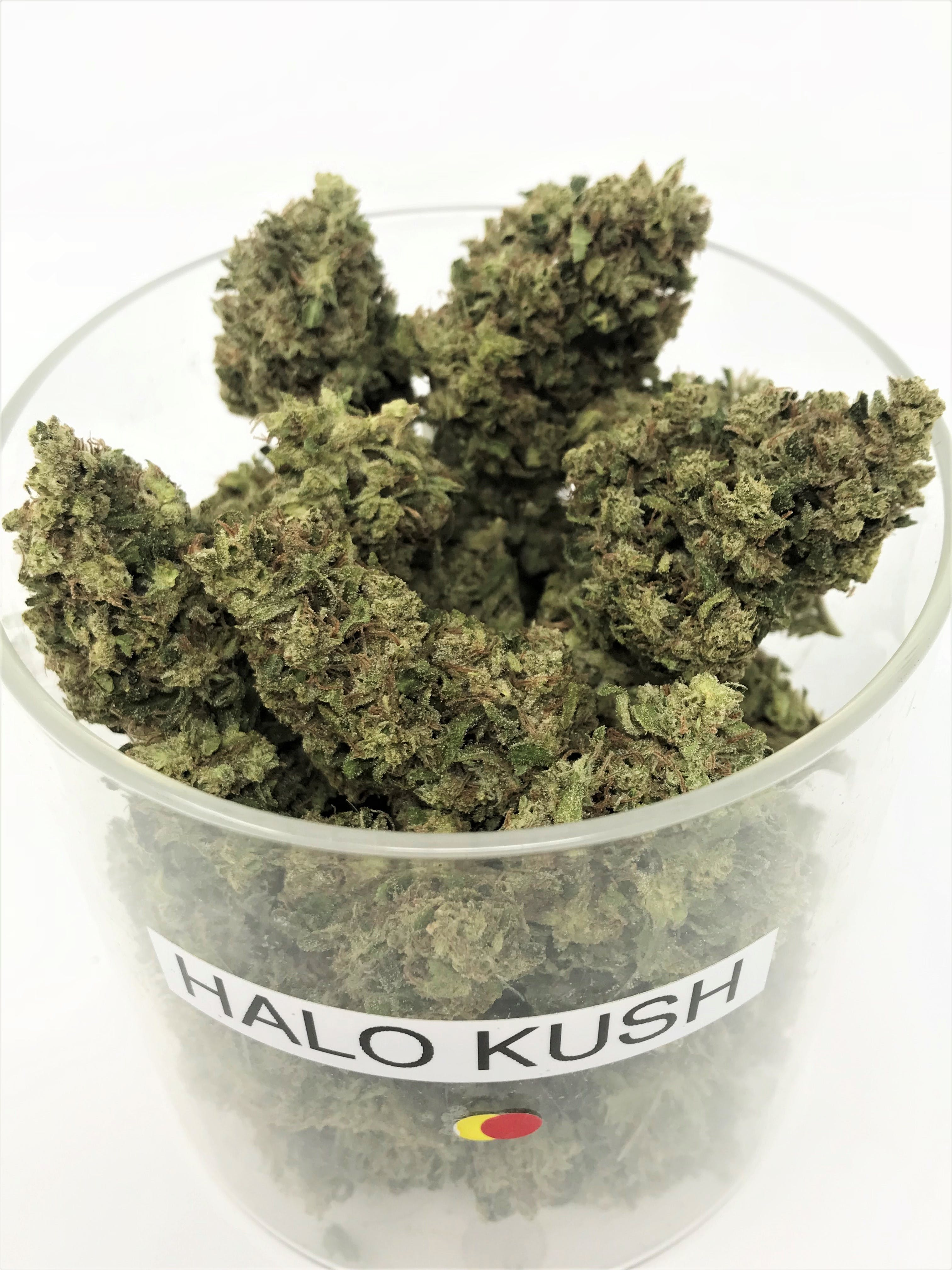 marijuana-dispensaries-call-for-address-murrieta-28-grams-of-halo-kush-24100-special-21-21