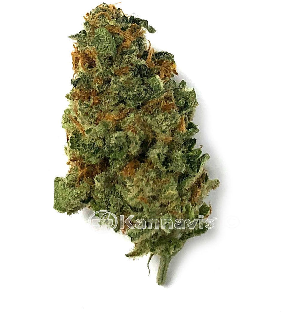 hybrid-9a95-by-grassroots