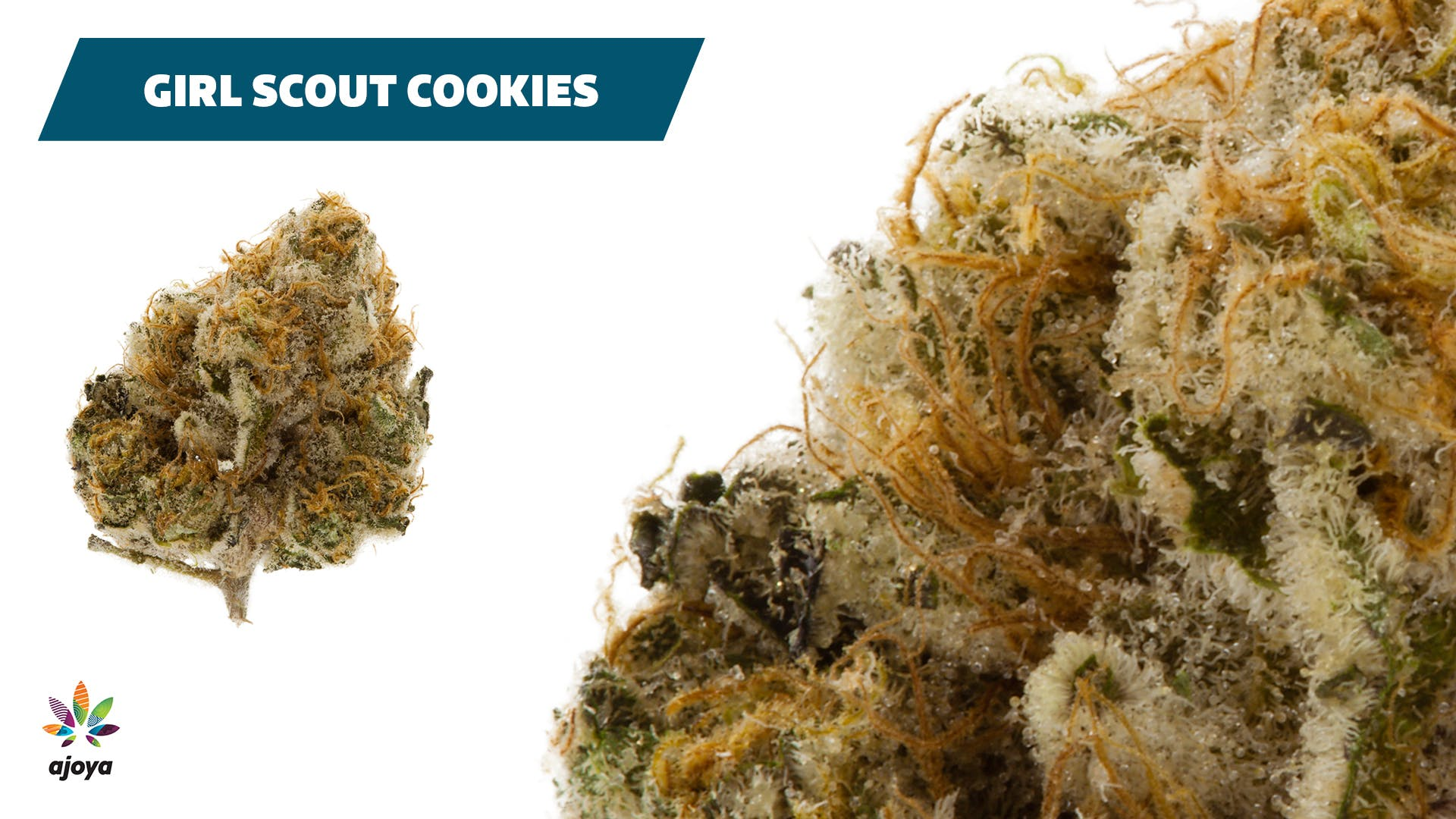 indica-ajoya-girl-scout-cookies-22-25-thc