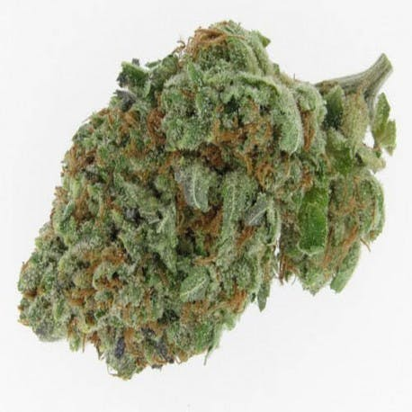 marijuana-dispensaries-ascend-medical-cannabis-co-in-lakewood-alien-og