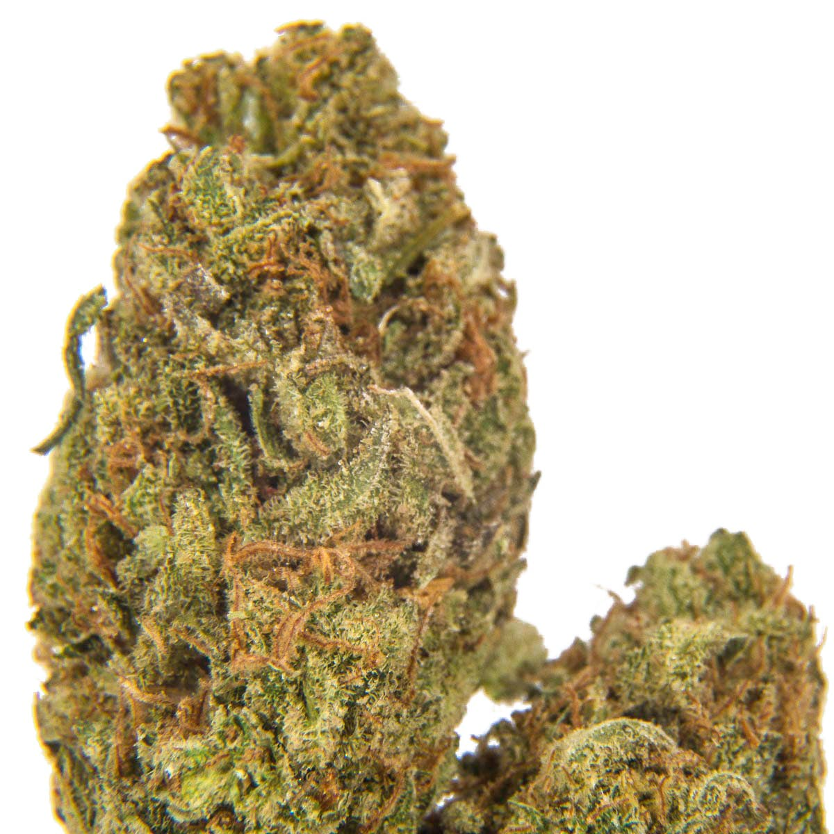marijuana-dispensaries-fire-and-glory-fullerton-in-fullerton-amnesia-haze