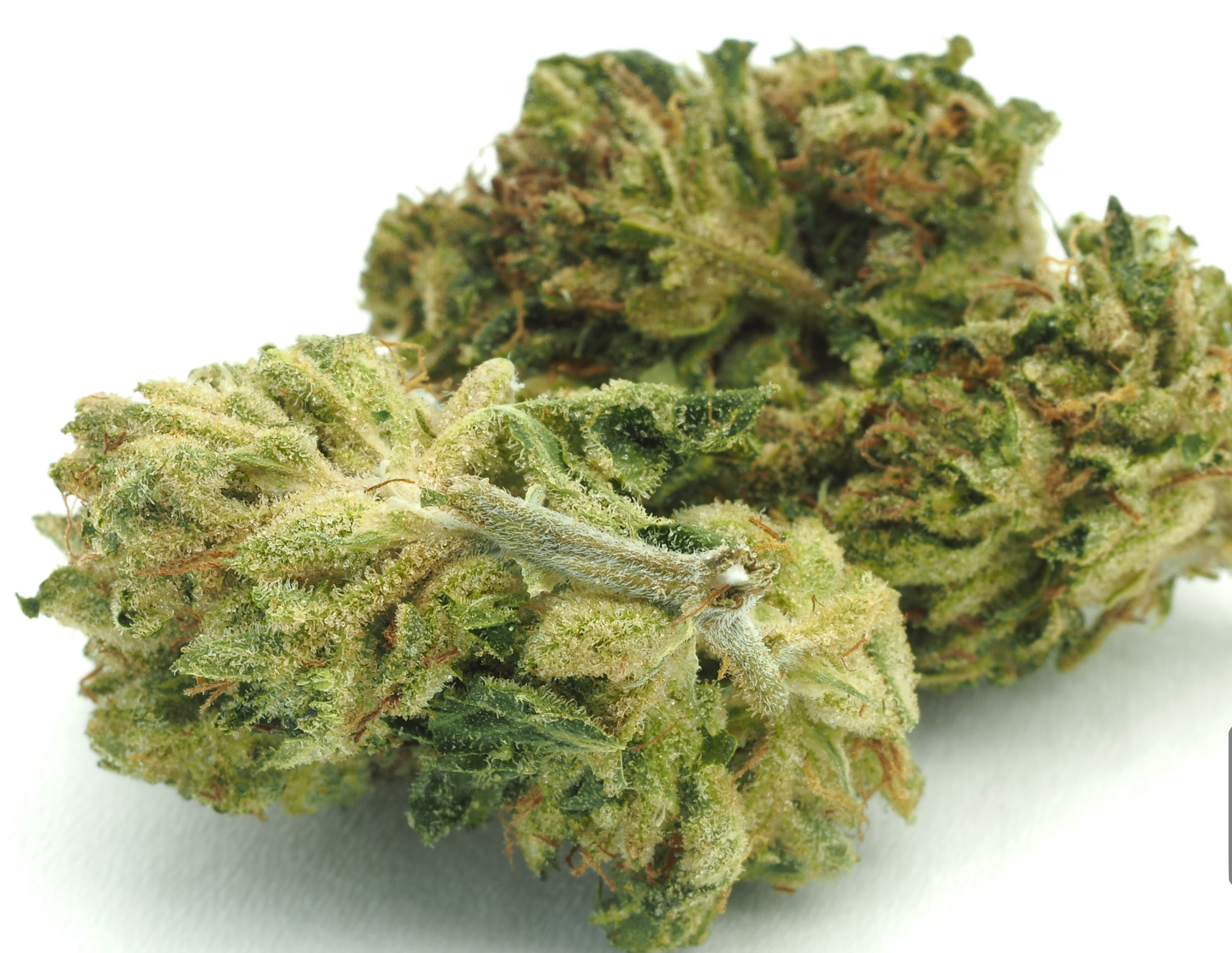 indica-angel-food-cake-indoor-by-talking-trees-farms