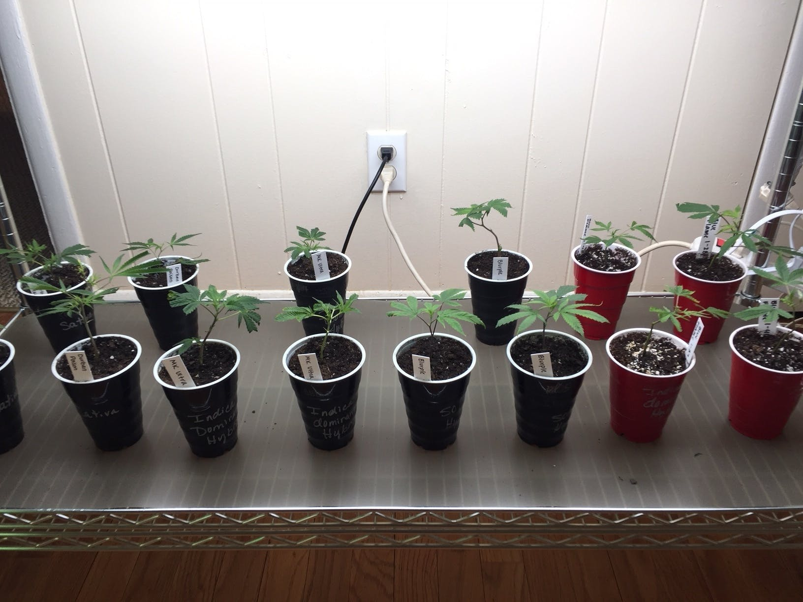marijuana-dispensaries-the-greens-of-central-oklahoma-in-oklahoma-city-assorted-clones