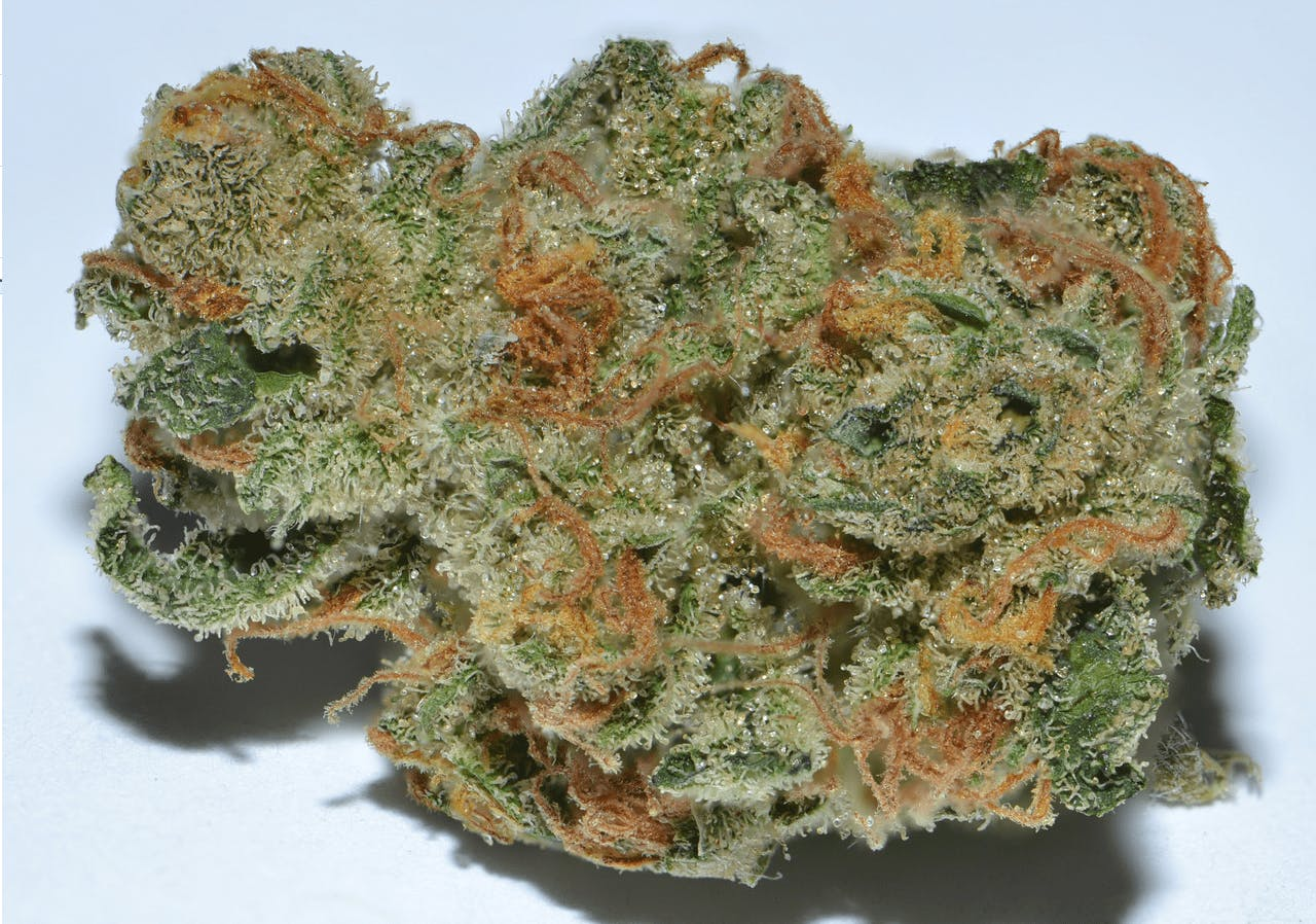 indica-beastmode-2-0-exclusive-5for35