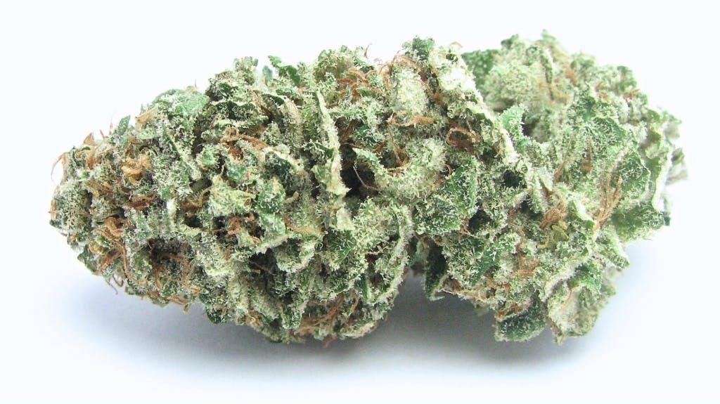 marijuana-dispensaries-11623-sheldon-street-suite-c-sun-valley-bianca