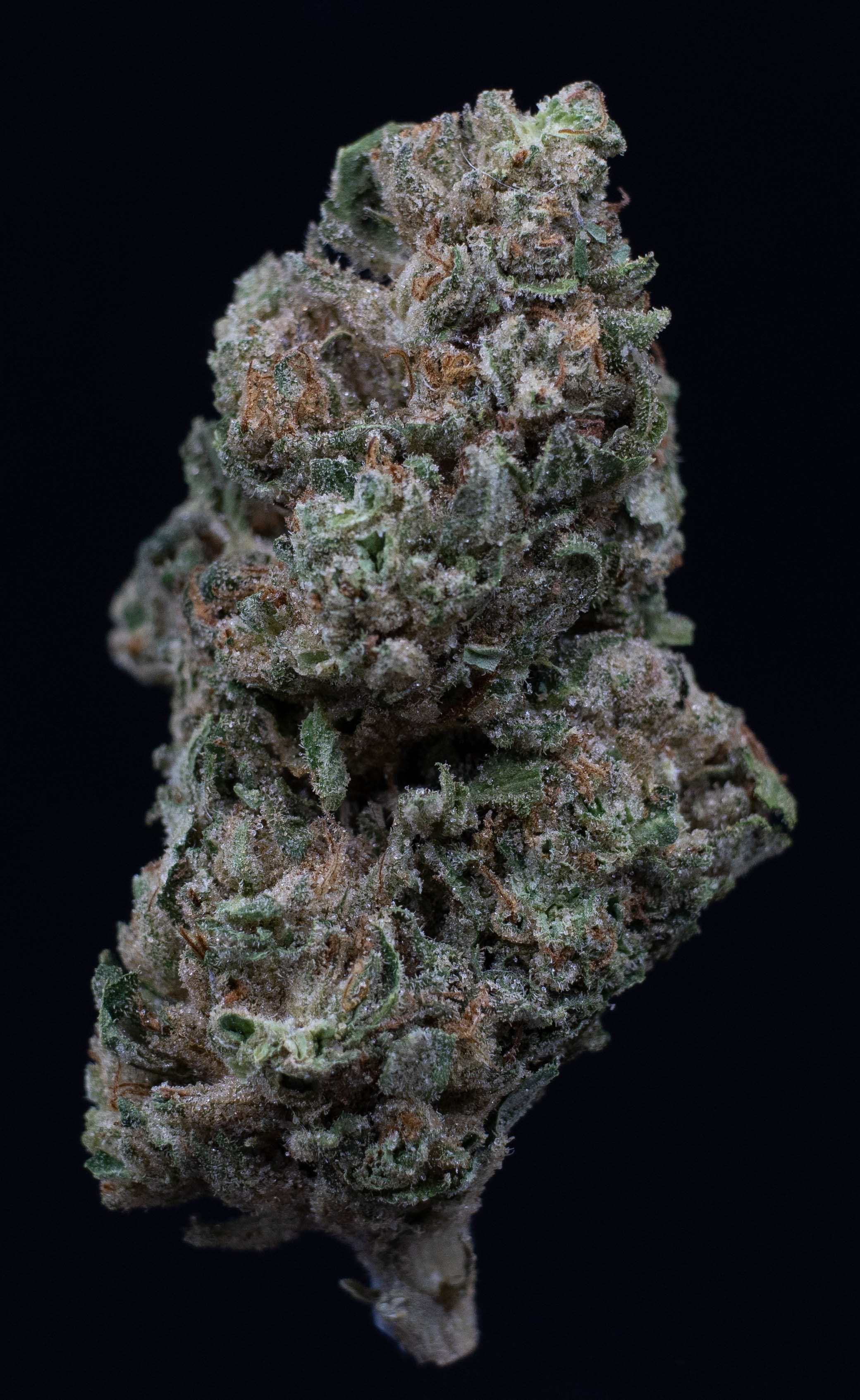 hybrid-black-lime-reserve-medical-sol-cultivations