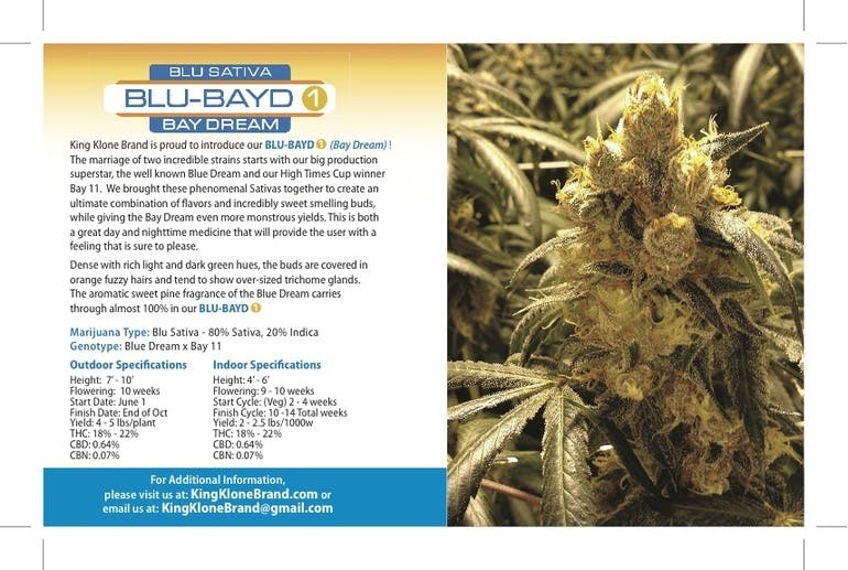 seed-blu-bayd-bay-dream