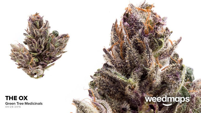 indica-bud-the-ox