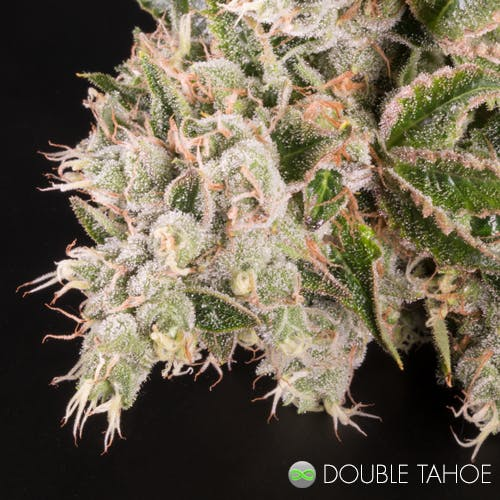 marijuana-dispensaries-900-north-college-ave-fort-collins-double-tahoe