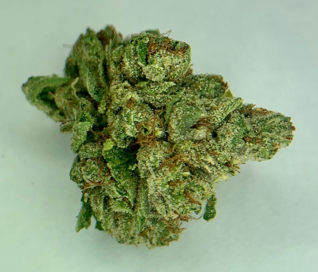 marijuana-dispensaries-549-n-western-ave-los-angeles-exclusive-el-chapo-og