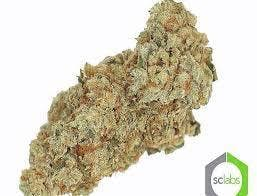 indica-exclusive-monte-carlo-og