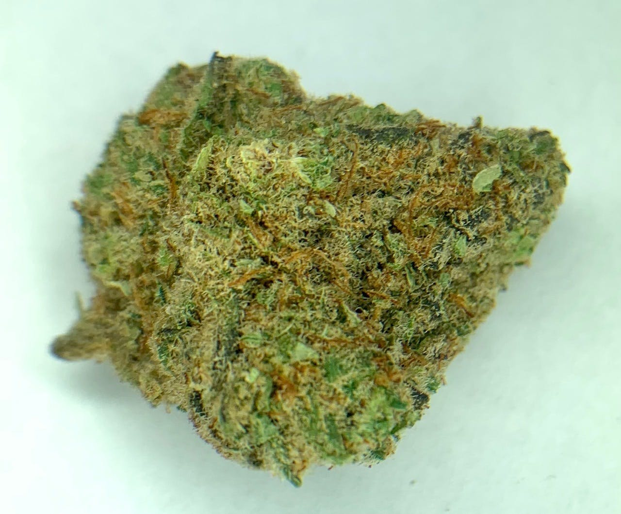 marijuana-dispensaries-549-n-western-ave-los-angeles-exclusive-slimer