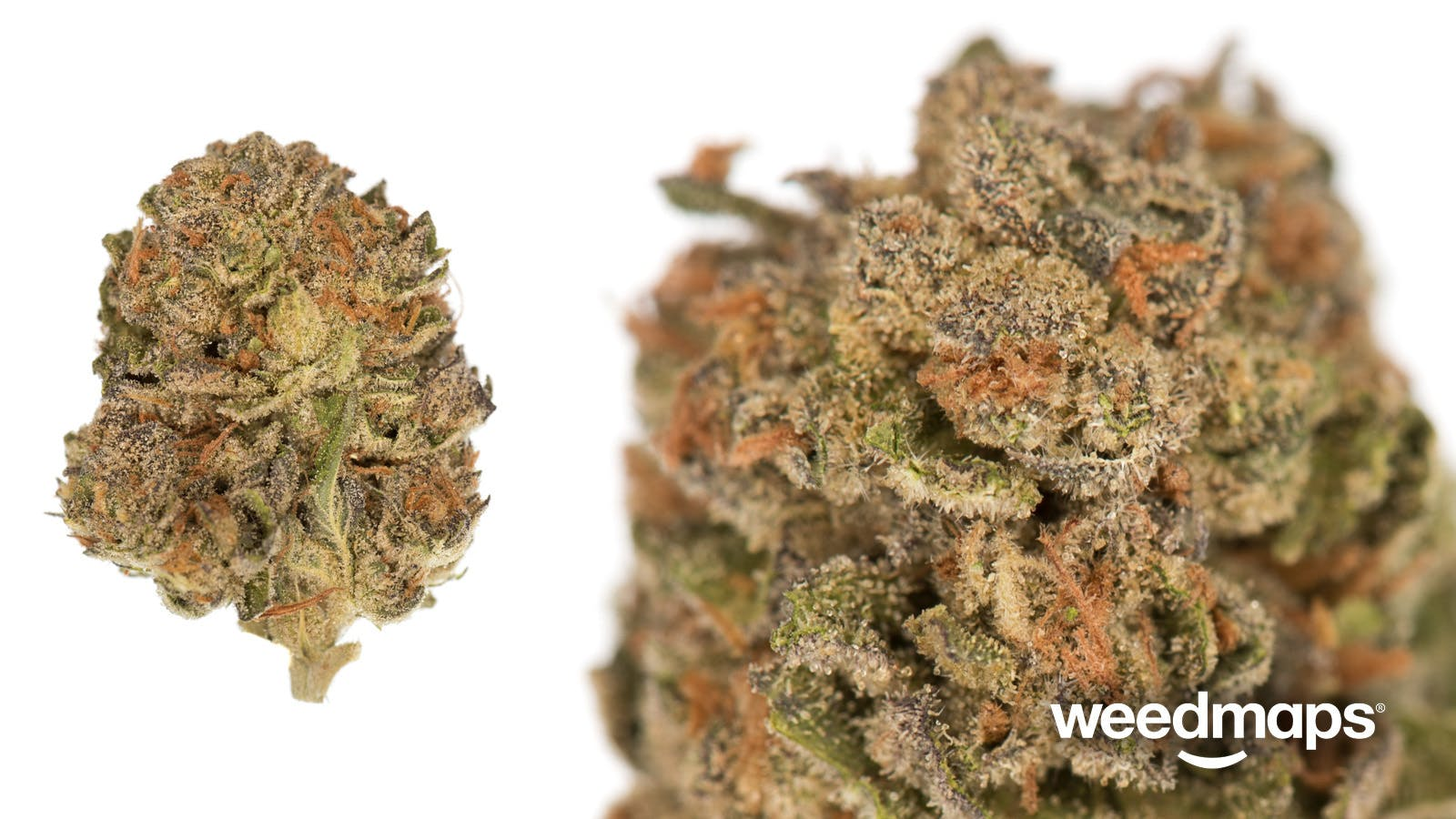 hybrid-fortune-cookies-2499-oz-special-21