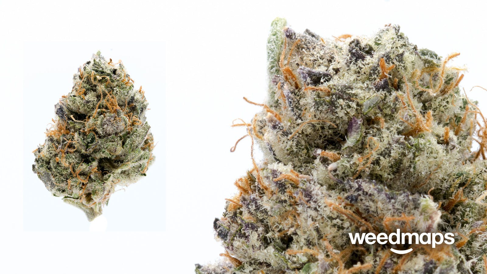 marijuana-dispensaries-ascend-in-portland-gorilla-glue-235