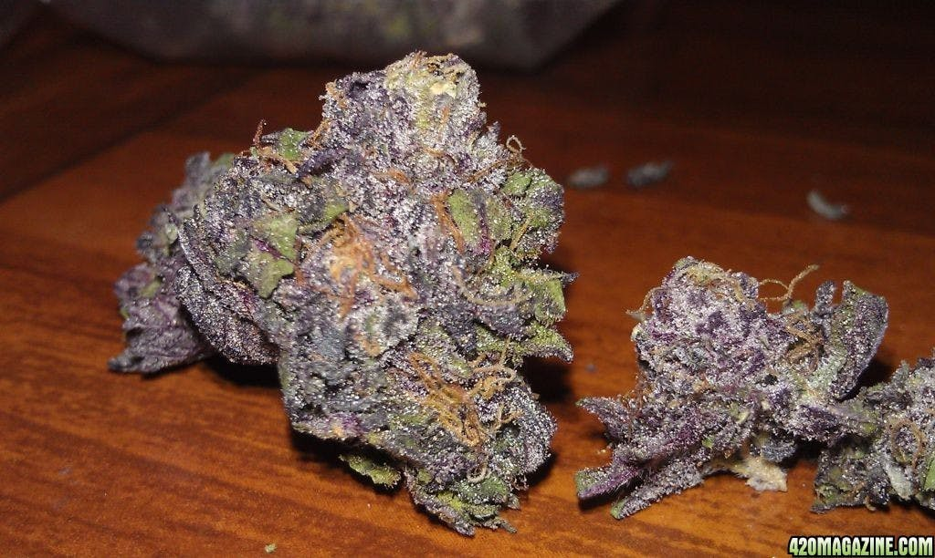 hybrid-killer-grape-ape