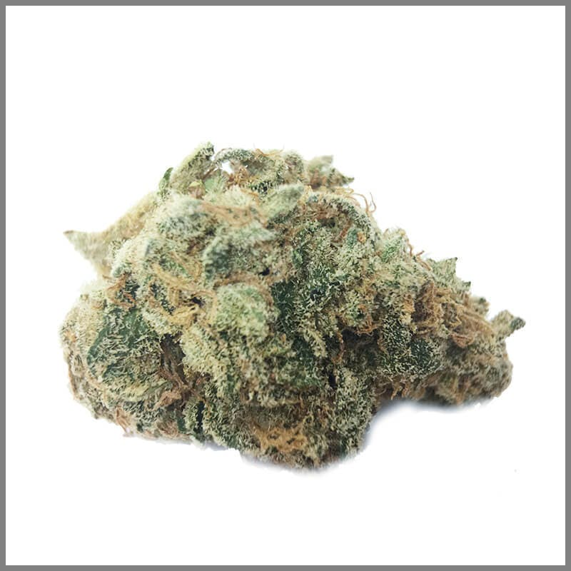sativa-premiums-lemon-tree