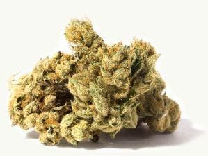 hybrid-special-sale-canndescent-create-310-19-7-25-thc