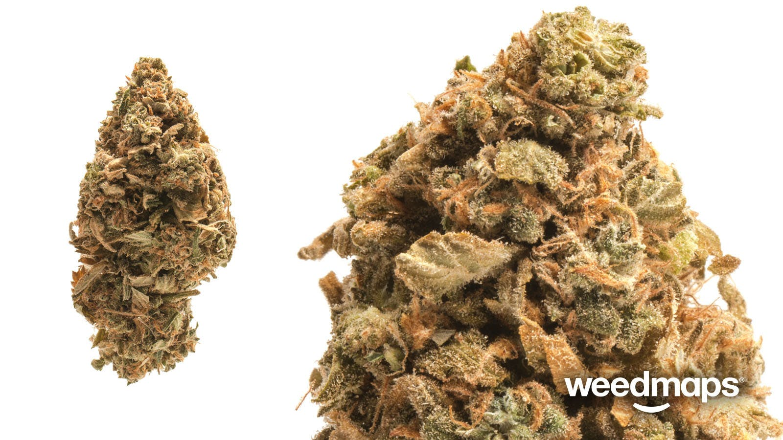 indica-speciallsd-afghani-indoor-0007special