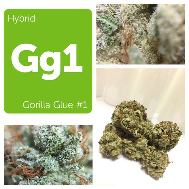hybrid-top-shelf-gorilla-glue-5g45-2oz430-qp840