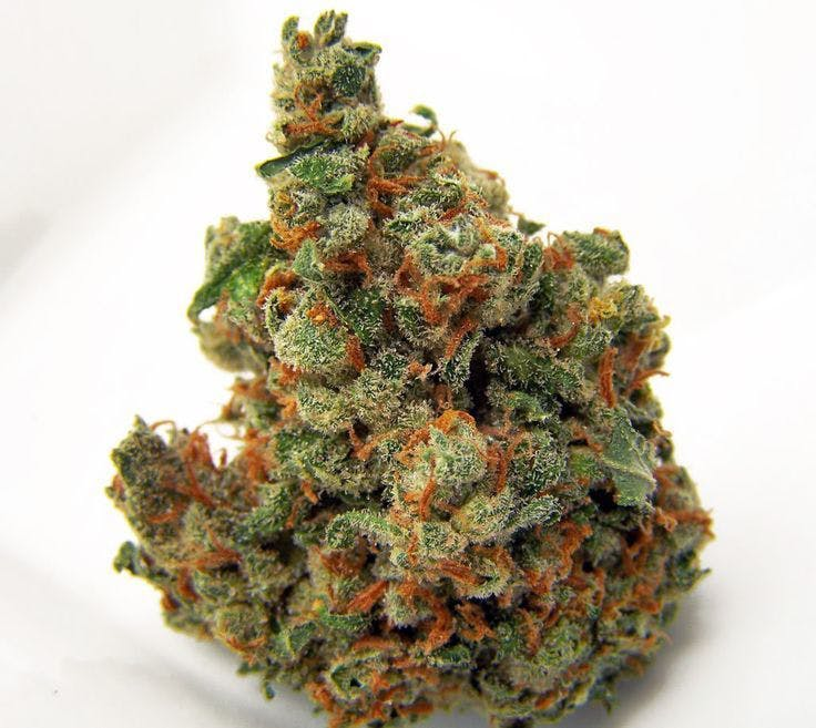 sativa-topshelf-hawaiian-dream-5g45-2oz430-qp840